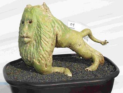 Адениум-лев