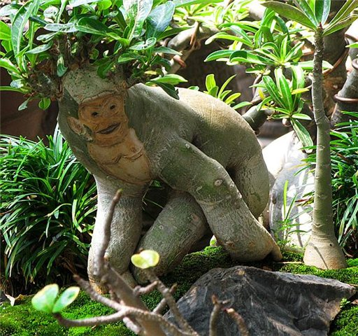 Адениум-обезьяна